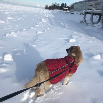 """""""Let's go guys I bet we can walk across Lake Superior and reach Isle Royale by kibble time"""""""